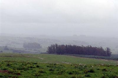 La lluvia, una 'bendición' para el campo   MurciaEconomía